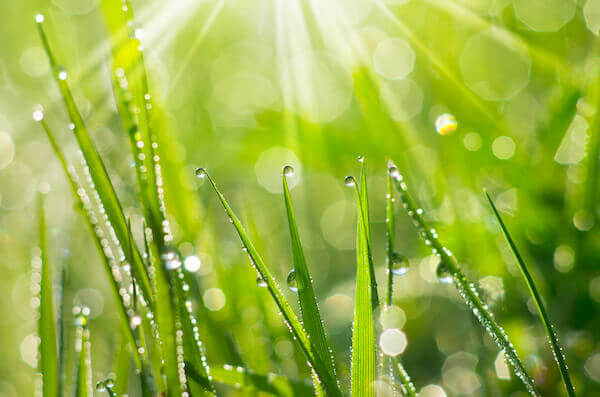 Finding Balance in your Florida-Friendly Lawn