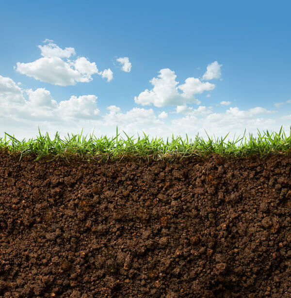 World Greener: Turf Grass to the Rescue!