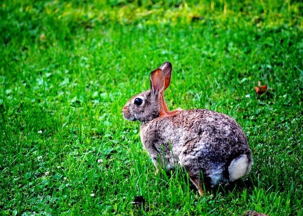 World Greener: Attracting Wildlife to Your Florida-Friendly Lawn