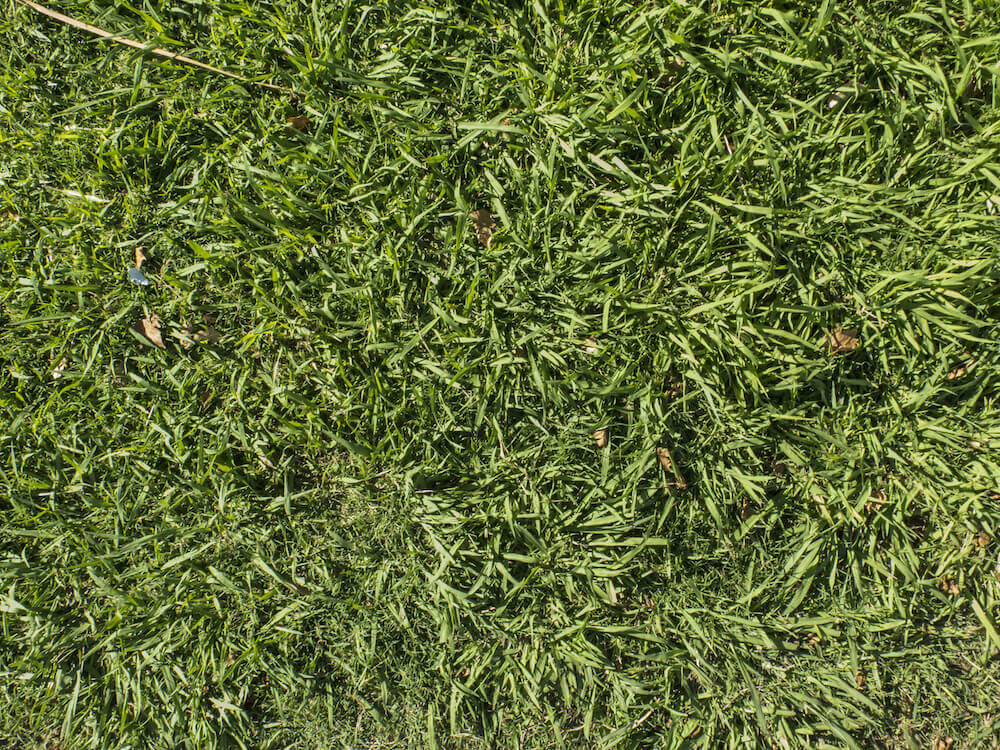 Managing Nematodes on Your Florida-Friendly Lawn