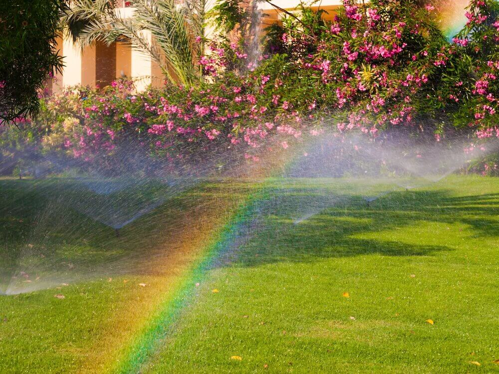 Watering Well: Keeping Your Florida-Friendly Lawn Healthy