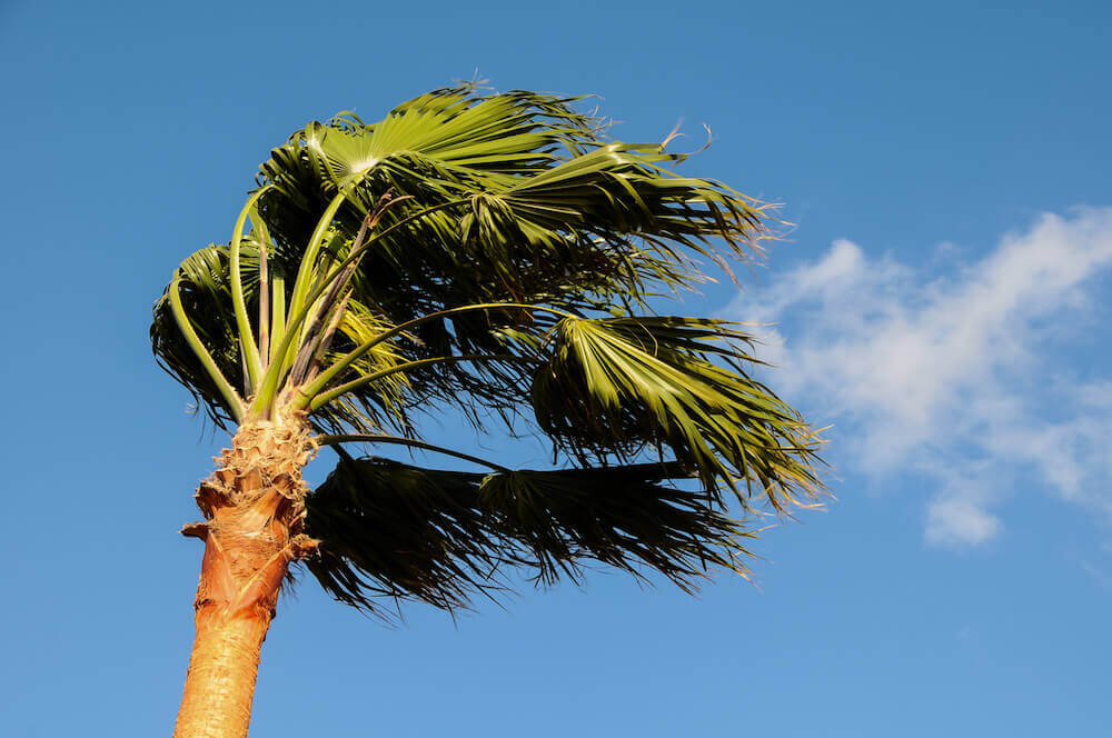 Caring for Your Florida-Friendly Palm Trees after a Storm