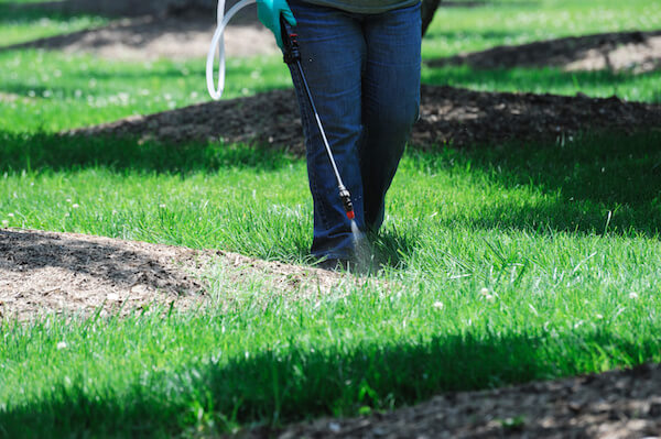 Controlling Florida Betony for a Florida-Friendly Lawn