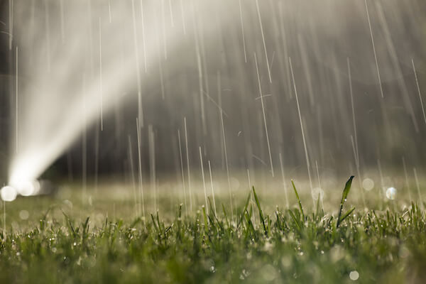 Watering Efficiently: Irrigate Responsibly
