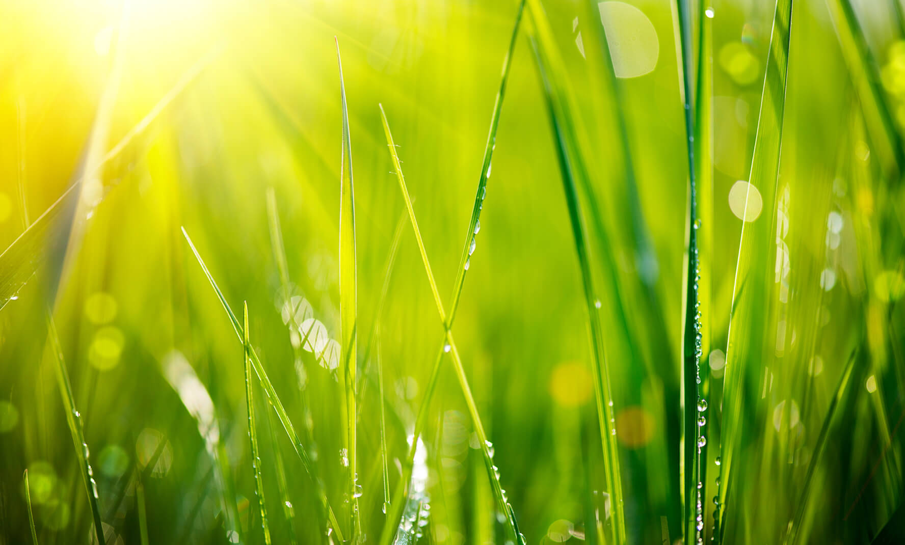 Your Spring Green Lawn