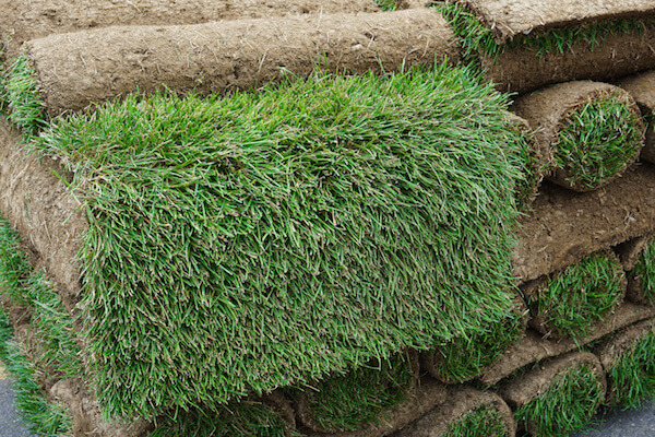 Managing Thatch for a Healthy Lawn or Turf