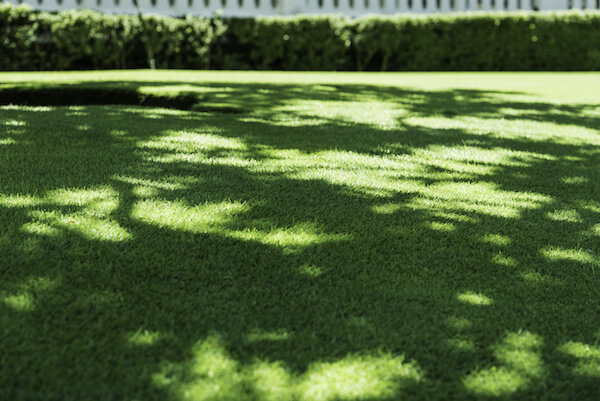 Turf in the Shade