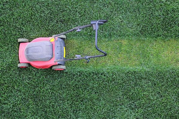 Grass cutter cuts the green  lawn