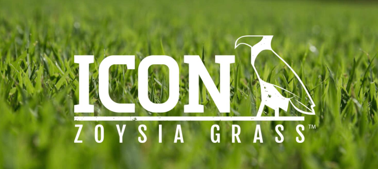 Icon Zoysia: The Next Generation