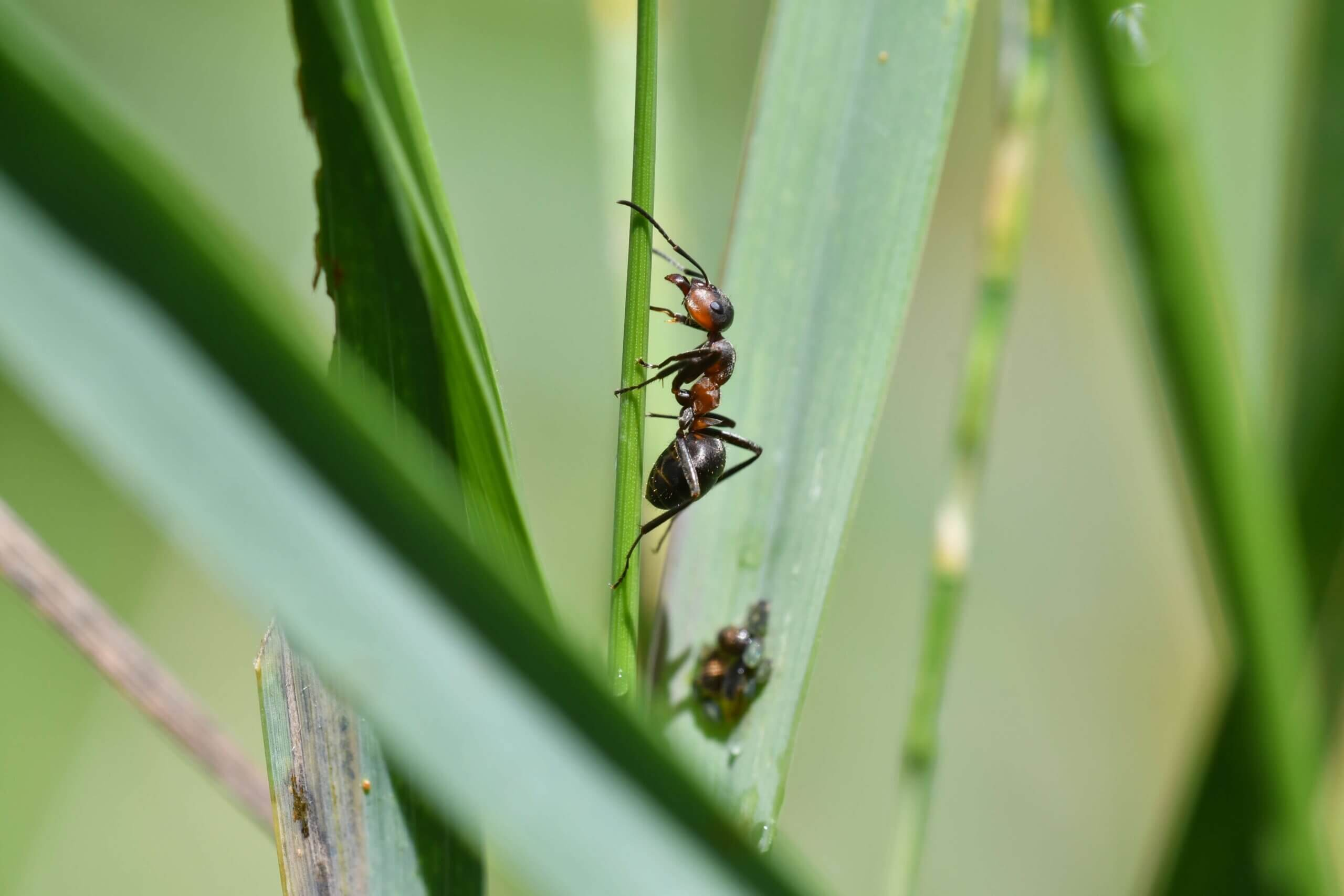 Guide to Common Florida Turf Pests