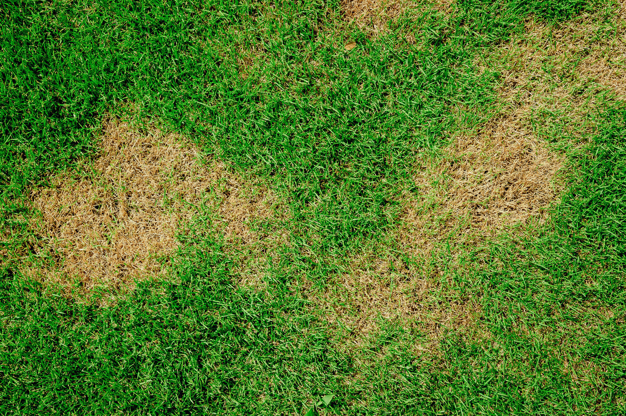 Dry brown patches on grass.