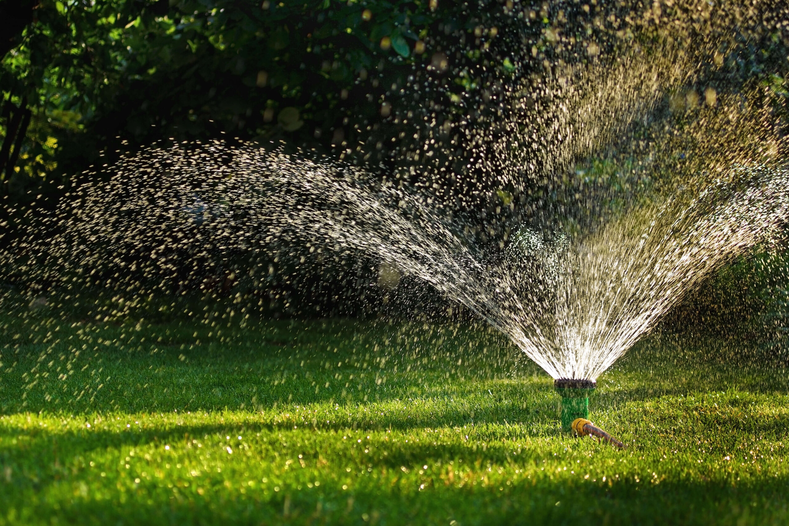 Grass Sprinkler in Action. Irrigation system - device of watering in the garden. Lawn sprinkler on the Golf course - spraying water over green grass.