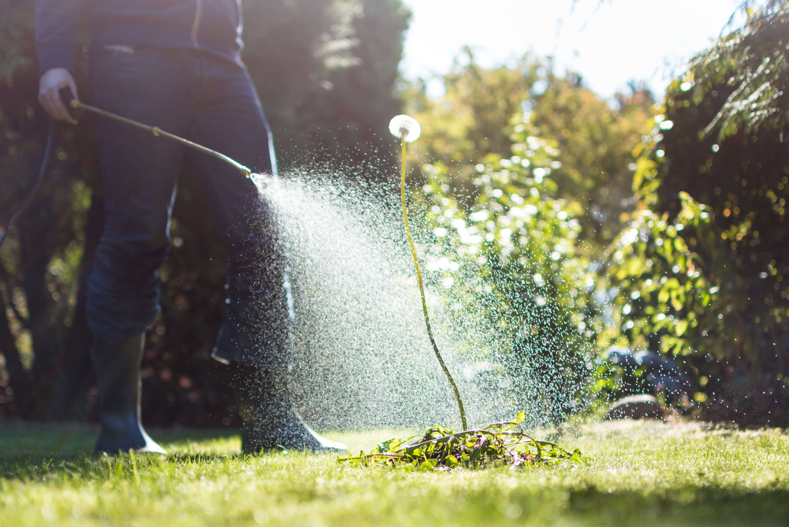 Lawn Herbicides for Florida grass and organic, natural sod.