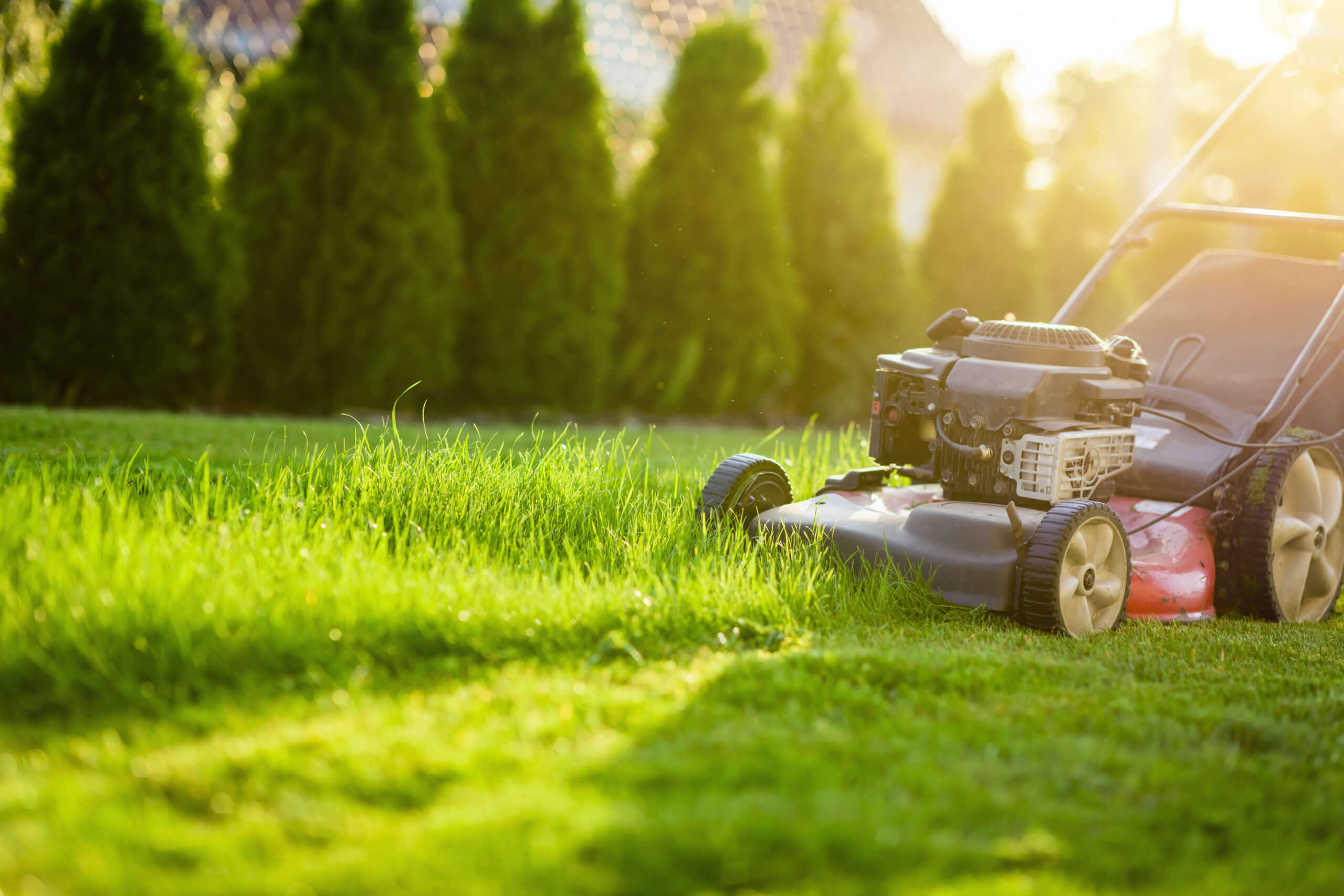 Grass clippings benefit grass from mowing your lawn.