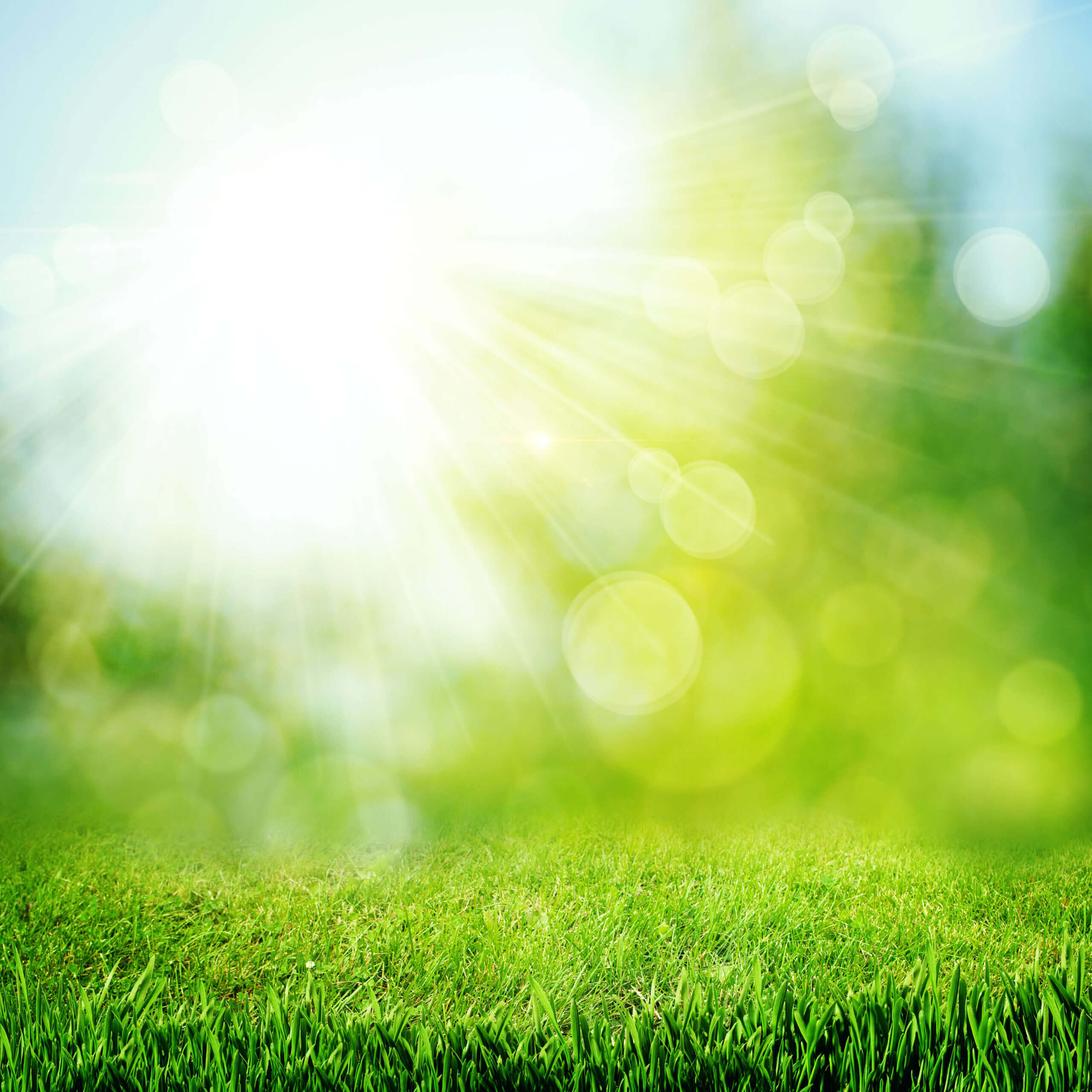 Under the bright sun. Abstract natural backgrounds