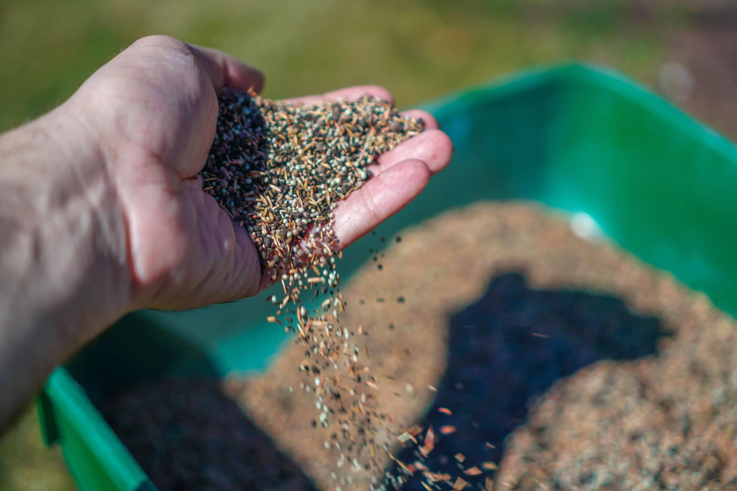 Fertilizer. Fertilize lawn. hands of man and woman holding lawn seeds