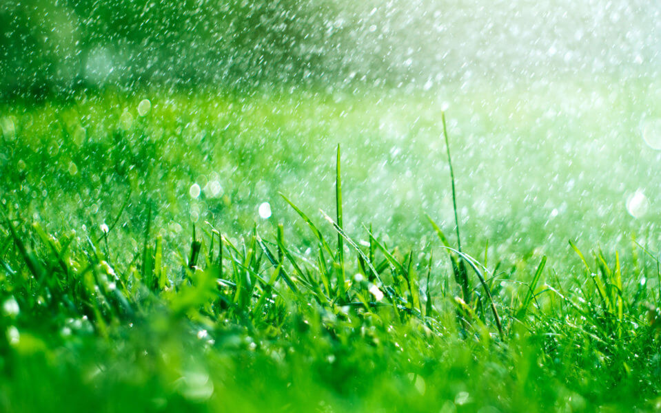 Hurricanes and Your Florida Lawn
