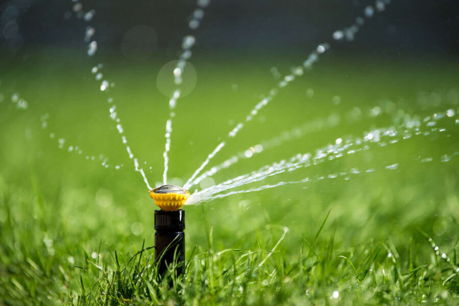 Tips for a Lush Green Lawn