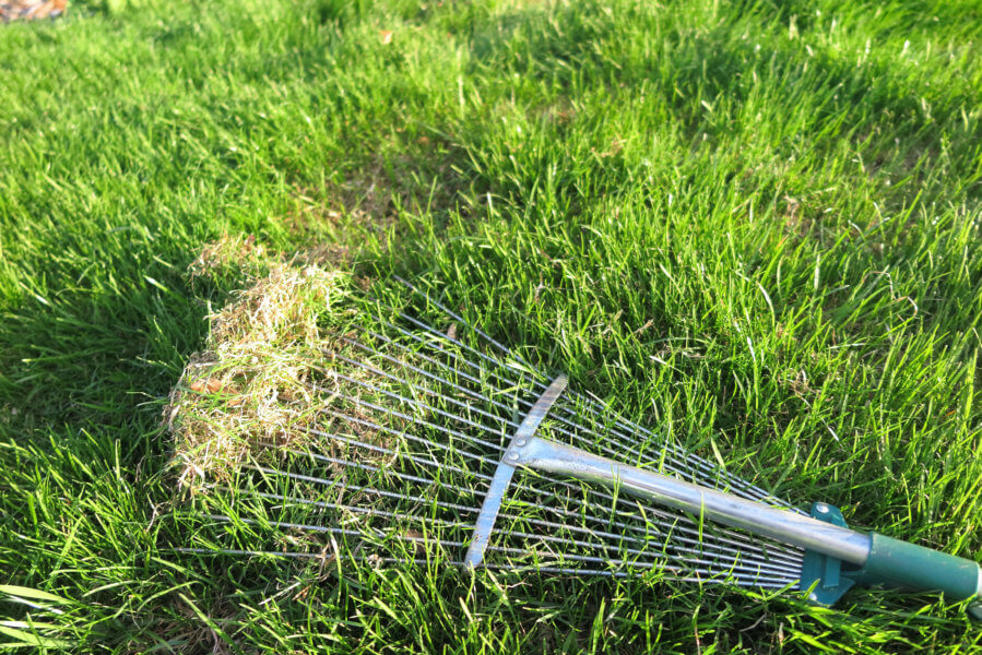 The Importance of Dethatching and Aeration