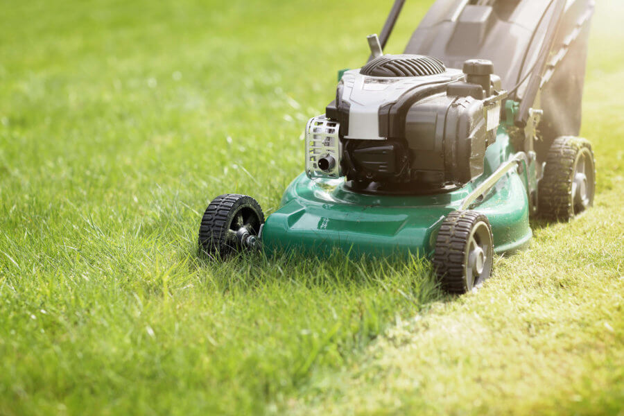 How Can I Thicken My Florida Lawn?