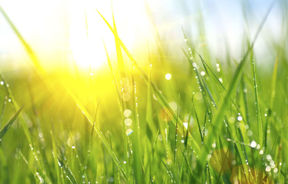 Spring Lawn Care Tips to Keep Your Grass Healthy and Lush