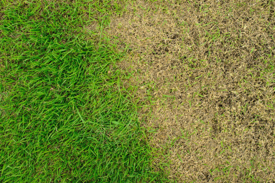 Common Florida Lawn Problems and Solutions